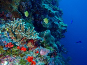 Colourful corals and fish