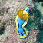Becoming a Nudi fan
