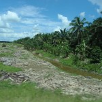 cleared jungle on the left ready to repeat the palm plantation on the right