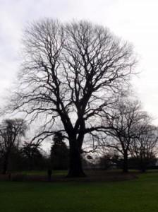 Majestic trees.