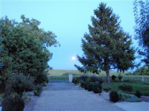 Full moon up the driveway and across the sunflower fields